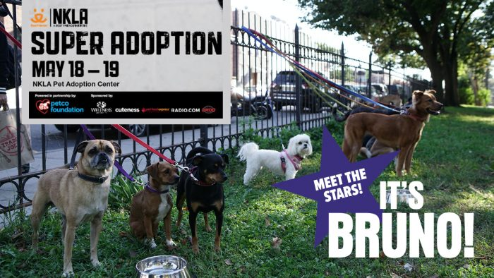The Stars of It's Bruno! Partner with Best Friends LA's Super Adoption Event