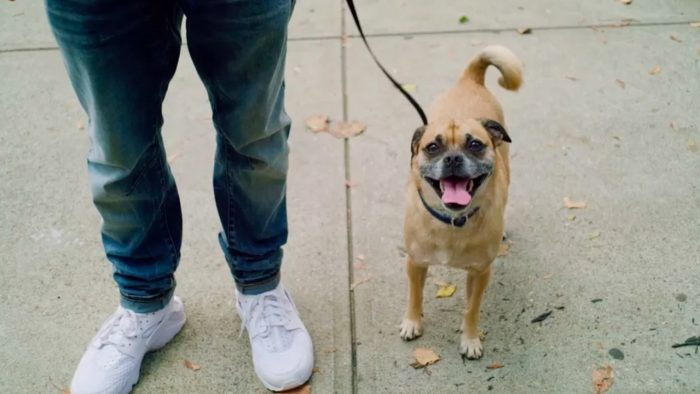 This Director Loves His Rescue Dog Bruno So Much, He Made an Entire Netflix Series About Him